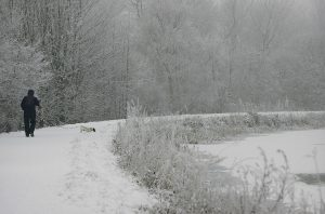 dog-walking-along-canal-in-winter
